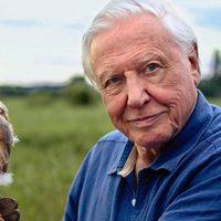Most te is remixelheted Sir David Attenborough felvételét