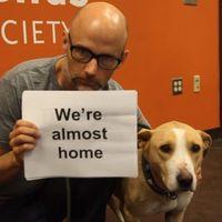 Állatok örökbefogadásáért kampányol új klipjében Moby