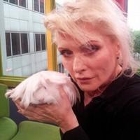 Debbie Harry nyugdíjba vonulna a Blondie éléről