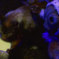 A Mastodon megmutatja, mit csinál a macskád, amíg te alszol