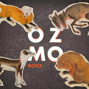 ozmo_bonz.jpg