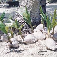 Élet a bakonyi kókuszerdőben