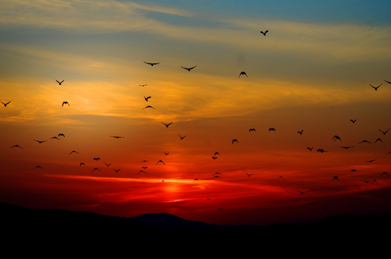 birds-clouds-dawn-70577.jpg
