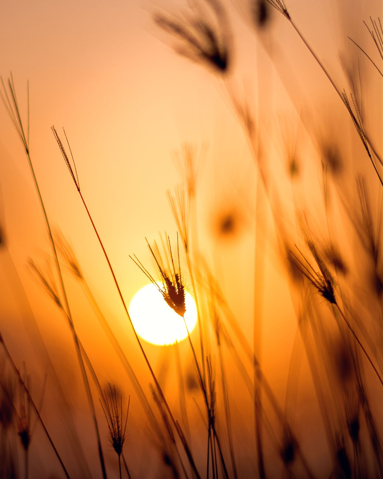 dawn-field-grass-1454769.jpg