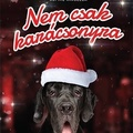 Cox: Nem csak karácsonyra