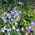 Udvartartásom tavaszi ébredése