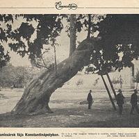 A janicsárok fája Konstantinápolyban - 1914. május 31. Érdekes Újság