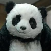 Eladásösztönzés Panda módra