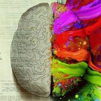 Jobb agyfélteke, bal agyfélteke