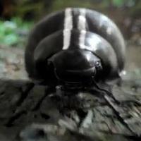 Beetle. It's back.