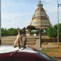 A legtöbbet utazó magyar macskák