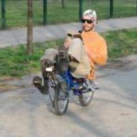 Pycikli, a kiskerekű poénbicaj