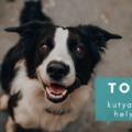 Top 5 kutyabarát hely Budapesten