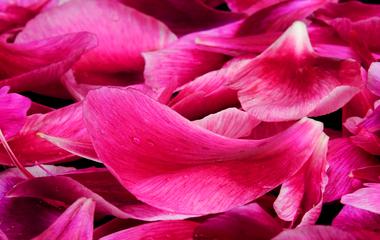 Mennyei bőrradír, illatos rózsaszirmokkal meghintve