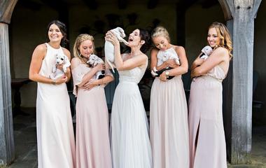 Kiskutyákra cserélték a virágokat a világ legcukibb esküvői fotózásán