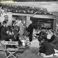 Birds - 1962
