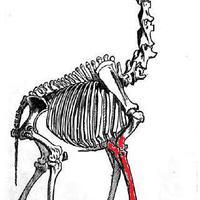 Zsiráfcsontokat találtak az Állatkert egyik sétaútja alatt