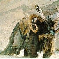 10 kihalt Star Wars-lény