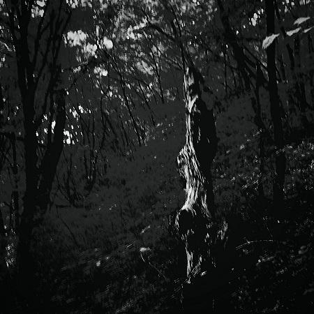 zenél az erdő