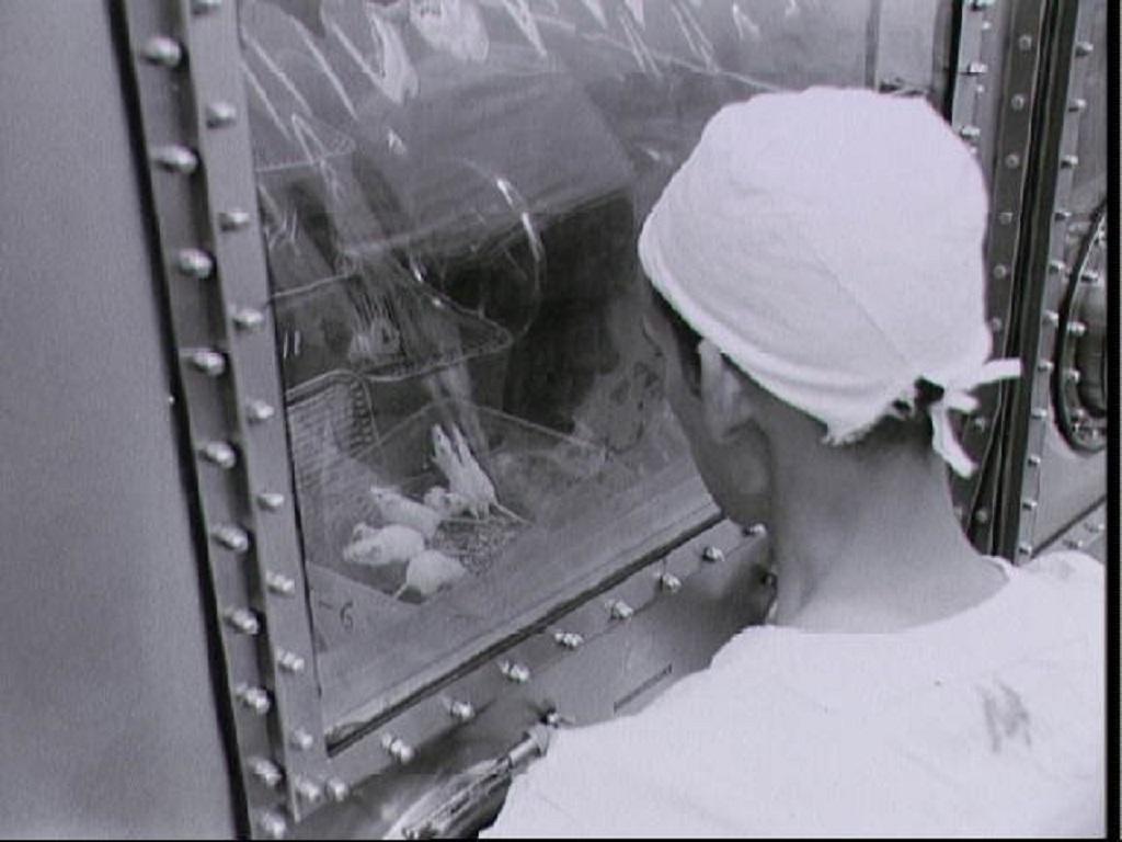 1950_mice_in_space.jpg