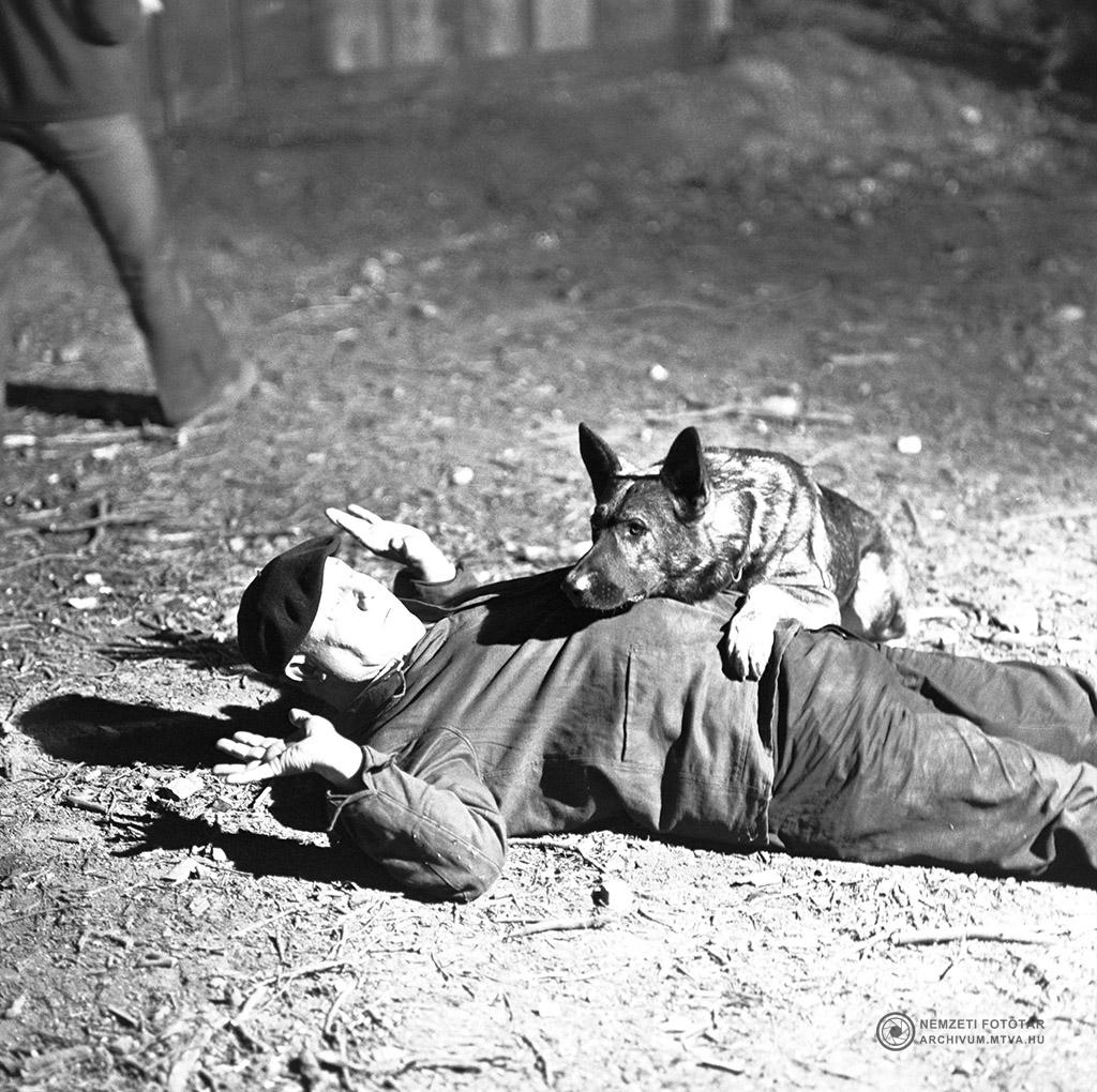 1975. június 1. Kántor kutya bűnözőt fog el (Farkas Antal) a Kántor című tévéfilmsorozat egyik jelenetében. MTV Fotó: Kiss Júlia