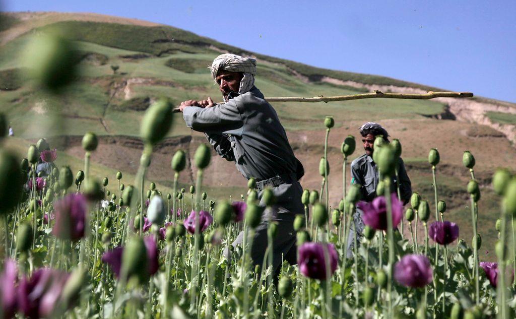 090923-afghan-opium-hmed-12p.jpg