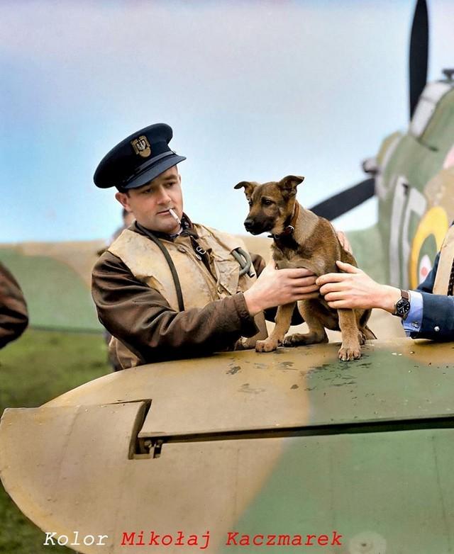 1944_jan_zumbach_batorsag_kereszttel_negyszer_kituntetett_lengyel_pilota_brit_szinekben.jpg