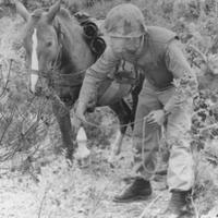 Egy kanca volt a koreai háború hőse