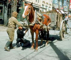 Hokkaidó - 1963