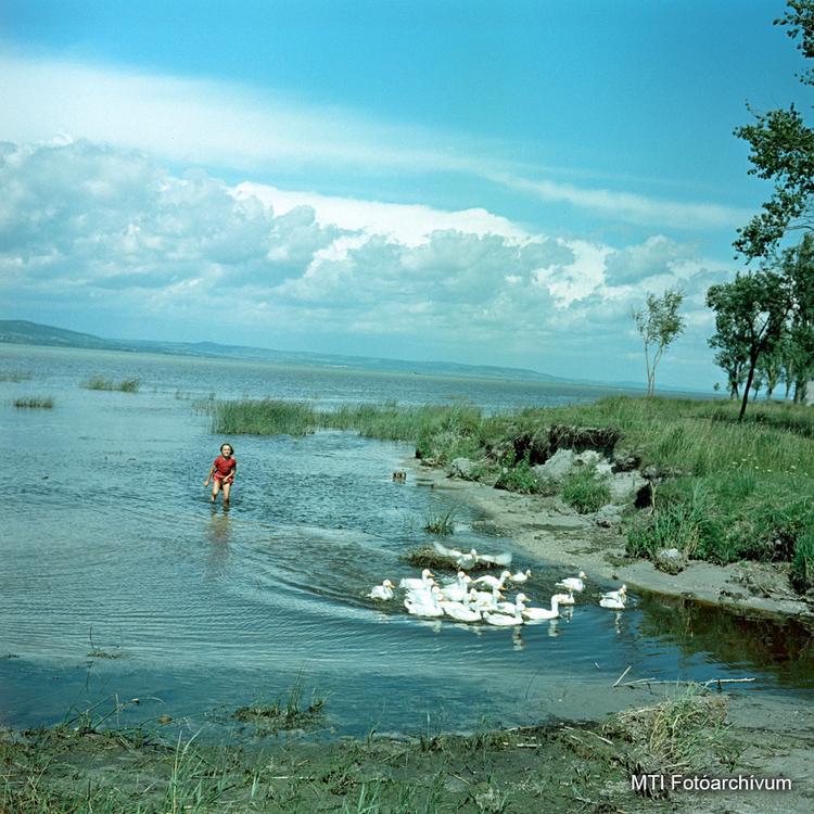 Színes mindennapok - 1960