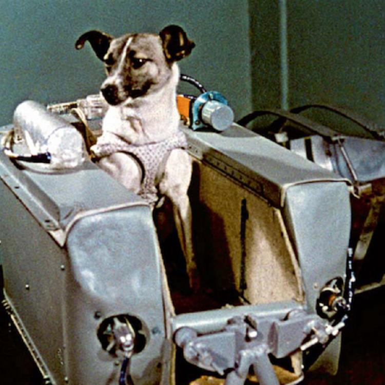 Állatok az űrben