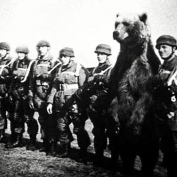 Wojtek a medve, aki katonának állt