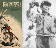 A madár, ami halálával győzte le Kínát