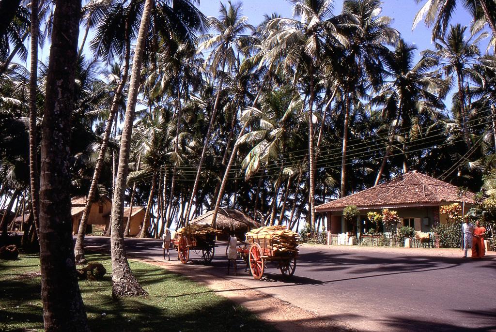 Valahol Kalutara közelében. Az utak errefelé meglepően jók voltak. Az óceánparti - meglepően jó minőségű - útvonal mentén végig pálmafák és bungalók sorakoztak, egy ideális trópusi paradicsom. Ezt a partvidéket később teljesen elpusztította a 2004-es cunami.