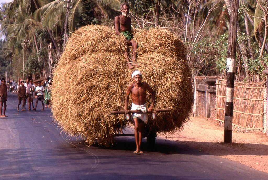 A motorizáció még messze, pedig már 1969-et írtunk. Ló híján és a szent tehén miatt az általános szállítóeszközök emberi erővel mozognak. Keralai út.