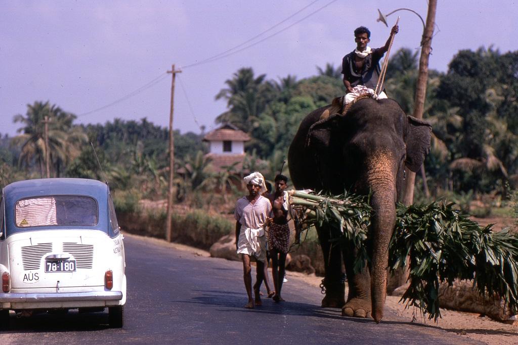 Azért az elefánt nem szokatlan az utakon sem. Kerala.
