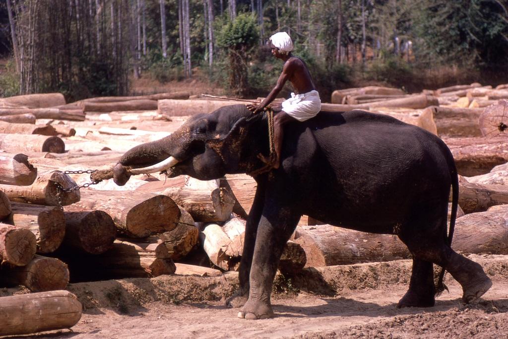 Sem pedig a nehéz tárgyak emelésénél. Kerala fatelep.