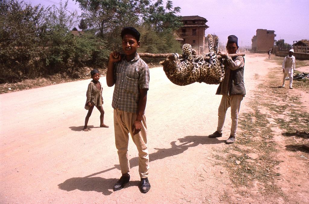 'Biciklitúrán voltunk, megnézni a Bodhnathban található sztúpát, amikor érdekes látványra lettünk figyelmesek. Ez a két fickó jött velünk szembe vállukon egy elejtett leopárddal. Az állat őshonos Nepálban és bizony sokszor támad emberre.' - Bruce Thomas