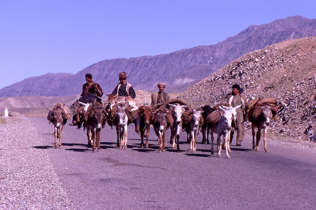 Dzsalálábád felé. A széles út az országban a legjobb minőségű volt (nem csoda hiszen amerikaiak építették néhány éve nemzetközi segélyként), csaknem semmi gépkocsi-forgalommal. A helyi közlekedés hagyományosabb formában volt jelen.