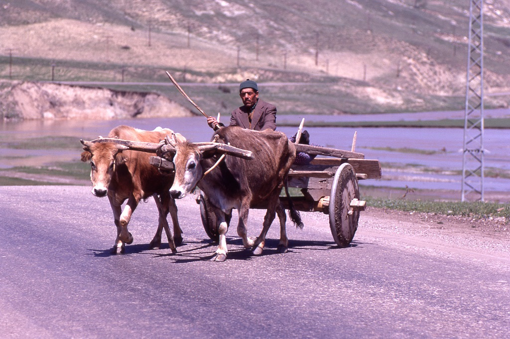 A gépesített forgalom a vidéken szinte kizárólag katonai teherautók, páncélosok és légvédelmi eszközök voltak, ezeket jobbnak látták nem fotózni.