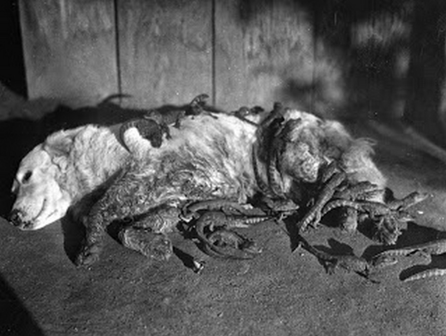 los_angeles_alligator_farm_1920s_06.jpg