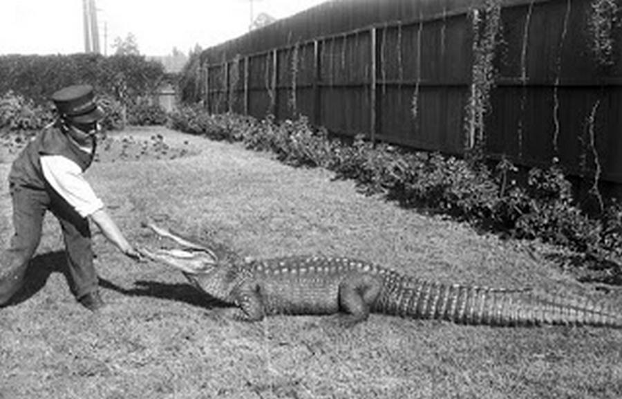 los_angeles_alligator_farm_1920s_10.jpg