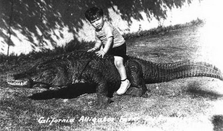 los_angeles_alligator_farm_1920s_12.jpg
