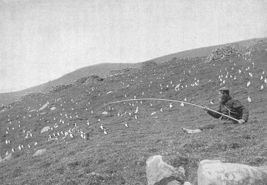 1897_egy_skot_telepes_lundara_vadaszik_a_st_kilda_szigeteken.jpg