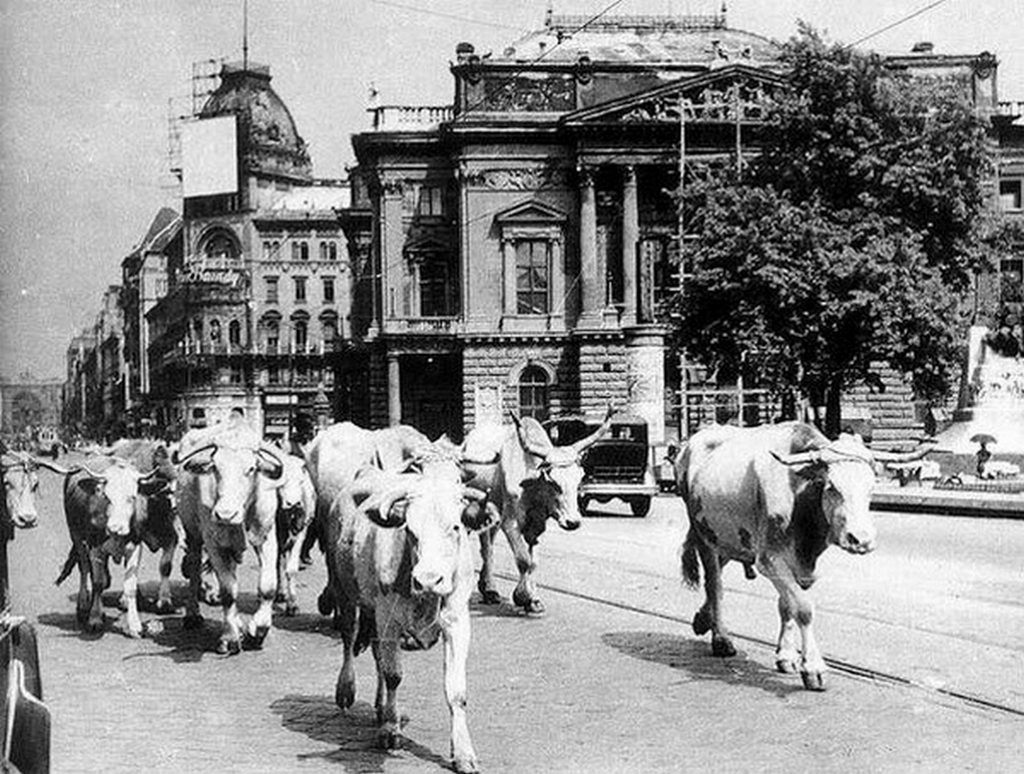 1947_marhakat_hajtanak_a_vagohidra_a_blaha_lujza_teren_at_hatterben_a_regi_nemzeti_szinhaz.jpg