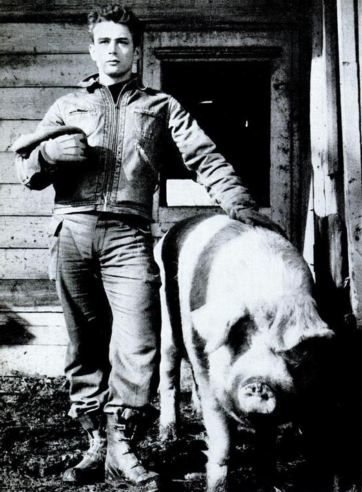 1955_james_dean_a_tragikusan_fiatalon_elhunyt_szinesz_egy_disznoval_nagybatyja_indianai_farmjan.jpg