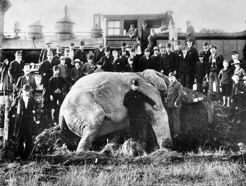 1885_vonat_altal_elutott_jumbo_a_barnum_cirkusz_elefantja_ontario_kanada.jpg