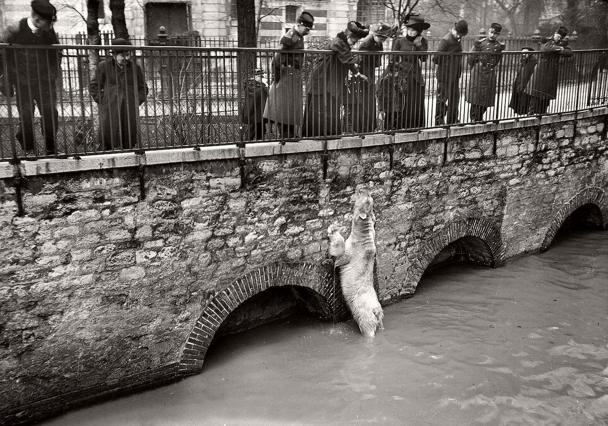 1910_a_varost_elaraszto_arviz_idejen_a_parizsi_allatkertbol_kiszabadult_jegesmedve.jpg