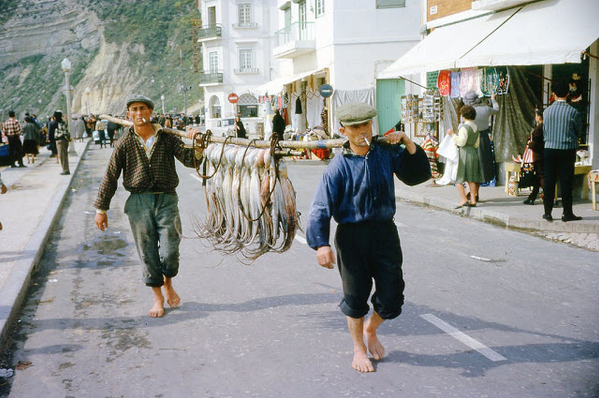1961_the_octopus_carriers_in_portugal_1961.jpg