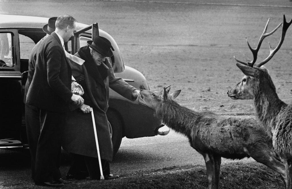 1963_sir_winston_churchill_szarvast_etet_a_richmond_parkban_a_89_eves_volt_allamfo_1965_januarjaban_halt_meg.jpeg